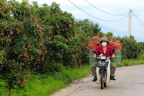 Người dân Bắc Giang phấn khởi tiêu thụ vải thiều