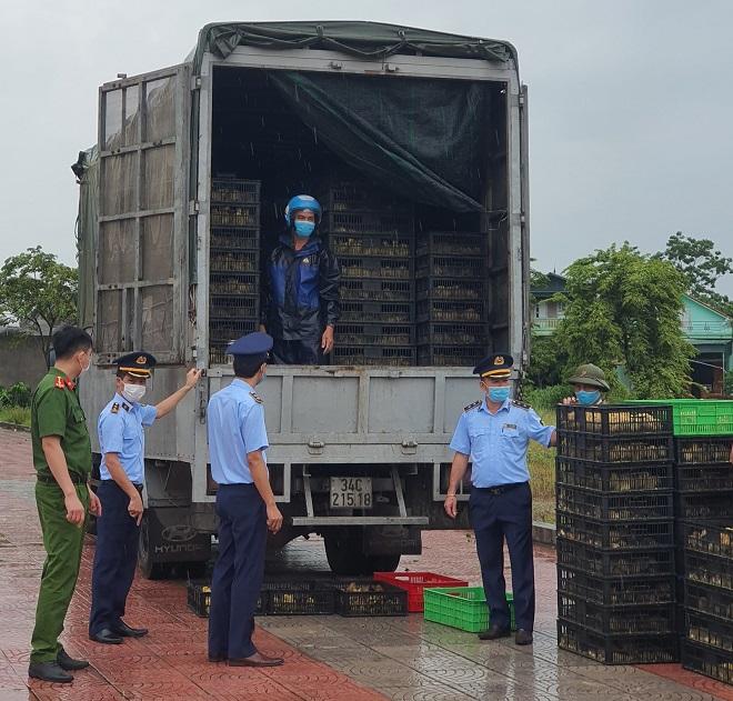 Lực lượng chức năng tỉnh Quảng Ninh đang kiểm đếm số tang vật vi phạm