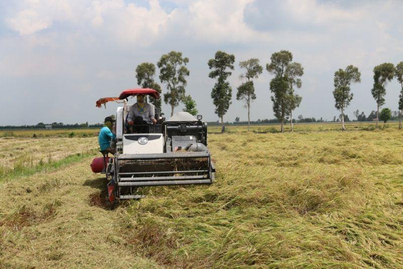 Agribank kịp thời cung ứng vốn phục vụ thu mua lúa gạo tại Đồng bằng sông Cửu Long