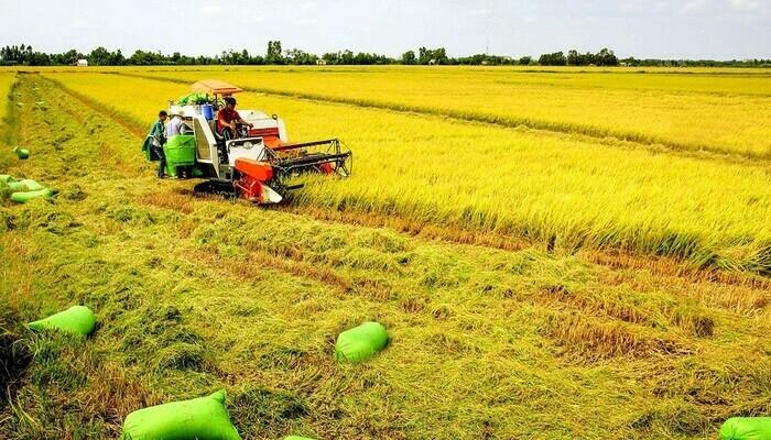 Để đảm bảo an ninh lương thực theo Kết luận số 81-KL/TW (ổn định 3,5 triệu ha) và nhu cầu của lương thực, xuất khẩu…, quy hoạch đến 2030, diện tích đất trồng lúa là 3,57 triệu ha.